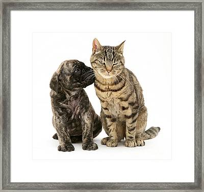 Puppy And Cat Framed Print
