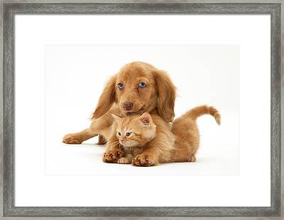 Puppy And Kitten Framed Print by Jane Burton