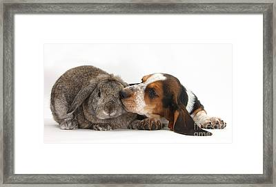 Puppy And Rabbt Framed Print