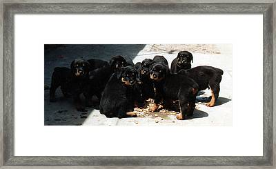 Puppy Chow Framed Print