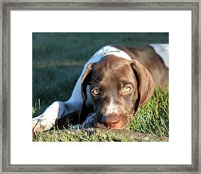 Puppy Eyes Framed Print by Brook Burling