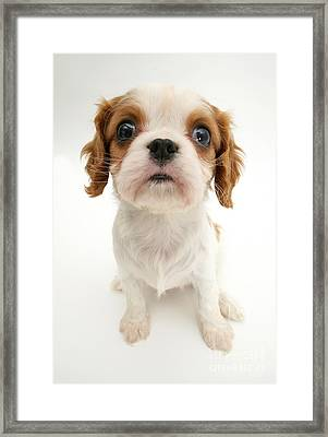 Puppy Framed Print by Jane Burton
