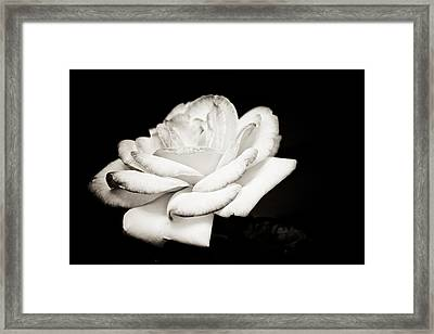 Pure Beauty Framed Print by Sara Frank