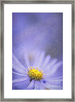 Purple Aster Framed Print by Neil Overy