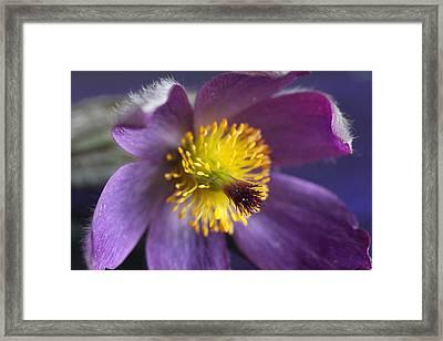 Purple Flower Framed Print by Mark J Seefeldt