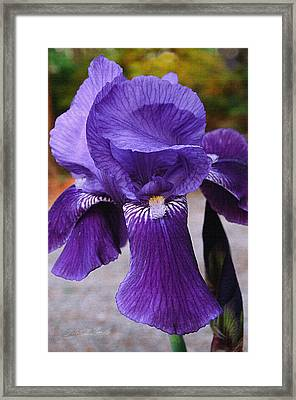 Framed Print featuring the photograph Purple Iris by Robert Kernodle