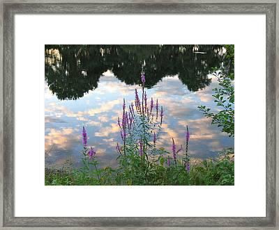 Framed Print featuring the photograph Purple Loosestrife by Mary McAvoy