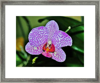Framed Print featuring the photograph Purple Orchid by Sherman Perry