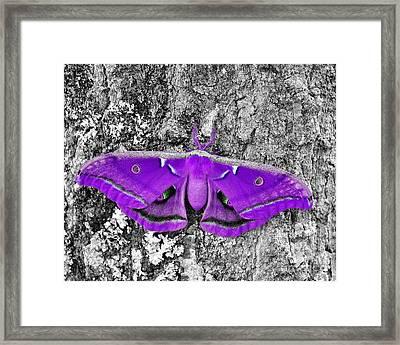 Purple Polyphemus Framed Print by Al Powell Photography USA