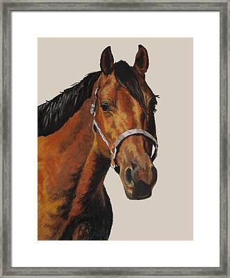 Quarter Horse Framed Print by Ann Marie Chaffin