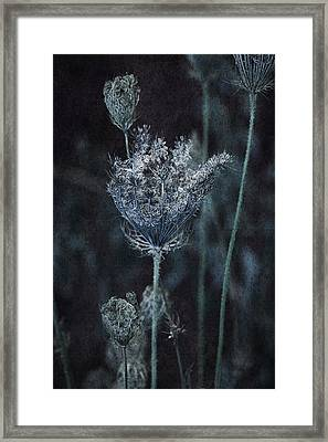Queen Anne's Lace Framed Print by Bonnie Bruno