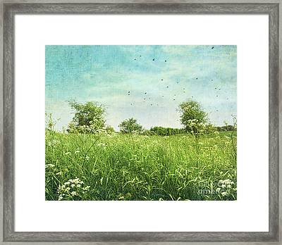 Queen Anne's Lace Wildflowers Framed Print