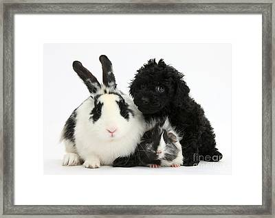 Rabbit, Puppy And Guinea Pig Framed Print