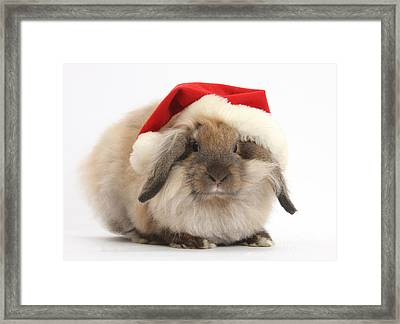 Rabbit Wearing Christmas Hat Framed Print by Mark Taylor