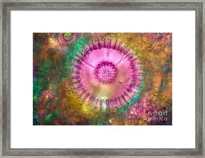 Radiolaria Framed Print by M I Walker