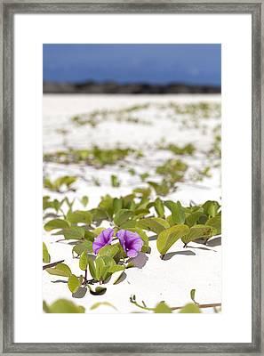 Railroad Vine Blossom Framed Print