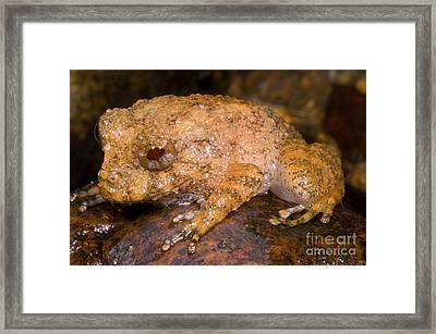 Rain Frog Framed Print