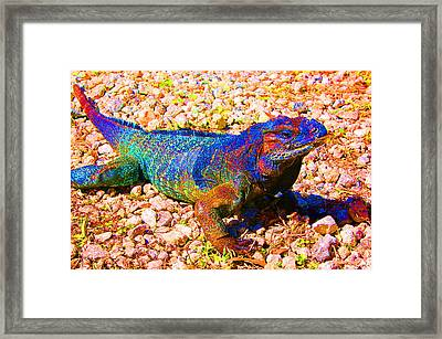 Rainbow Lizard Framed Print by Katheryn Napier