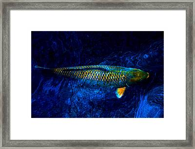 Rar Fish Framed Print