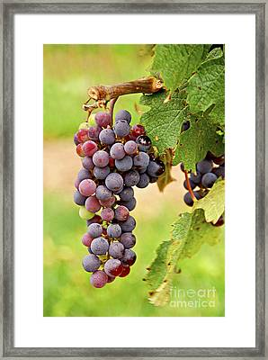 Red Grapes Framed Print by Elena Elisseeva