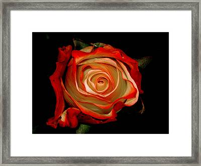 Red Framed Print by Monika A Leon