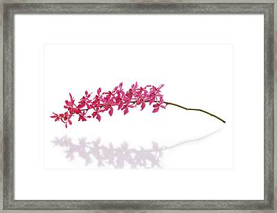 Red Orchid Framed Print by Atiketta Sangasaeng