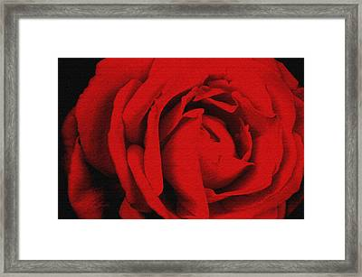 Framed Print featuring the photograph Red Rose by Robert Kernodle