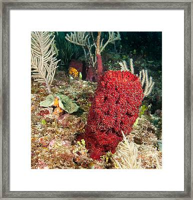 Red Sponge Framed Print