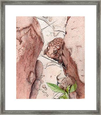 Red Spotted Toad Framed Print
