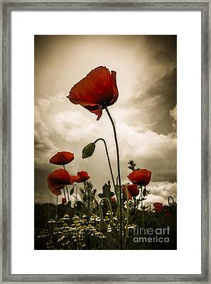 Red Weed Framed Print by Martin Dzurjanik