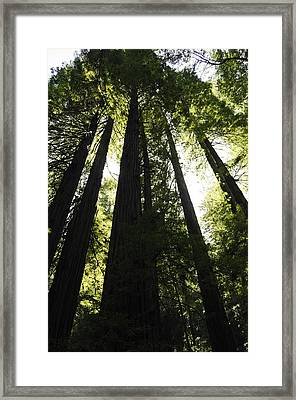 Red Woods Framed Print by Paul Plaine