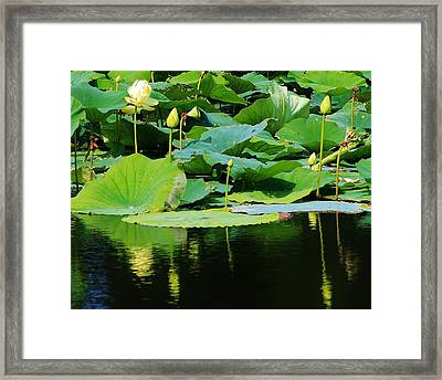 Reflecting Waters Framed Print by Bruce Bley