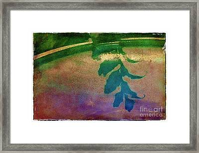 Reflection Framed Print by Judi Bagwell