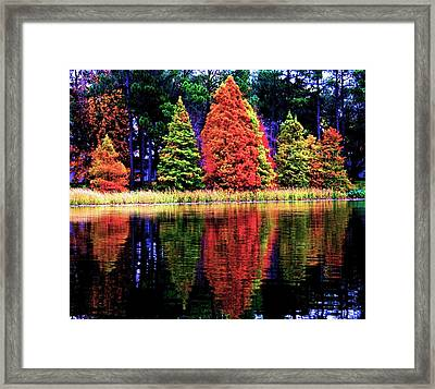 Reflections Framed Print by Carrie OBrien Sibley