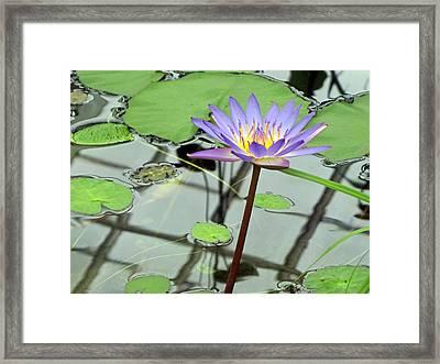 Reflections Framed Print by Wendi Matson