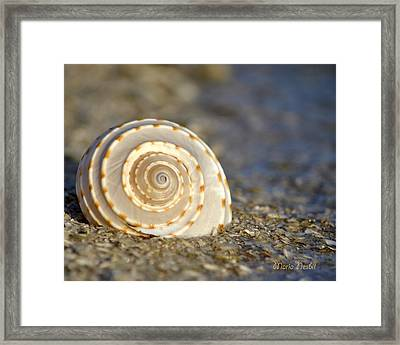 Resonance Of The Sea Framed Print
