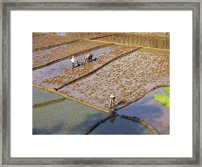 Rice Farmers Framed Print by Bjorn Svensson