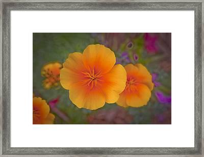 Rikis Poppy 3 Framed Print