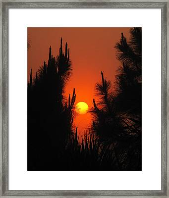 Rise And Pine Framed Print by Peg Urban