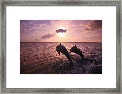Roatan, Bay Islands, Honduras Two Framed Print by Stuart Westmorland