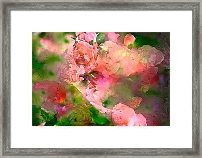 Rose 142 Framed Print by Pamela Cooper