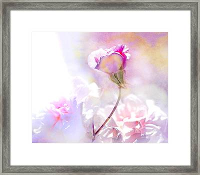 Rose By Any Other Name Framed Print