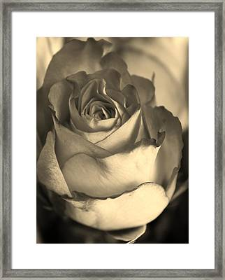 Rose In Sepia Framed Print by Bruce Bley