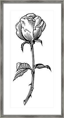 Rose, Lino Print Framed Print