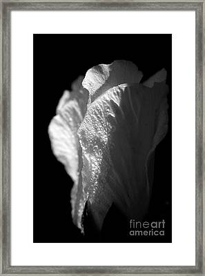 Framed Print featuring the photograph Rose Of Sharon by Jeannette Hunt