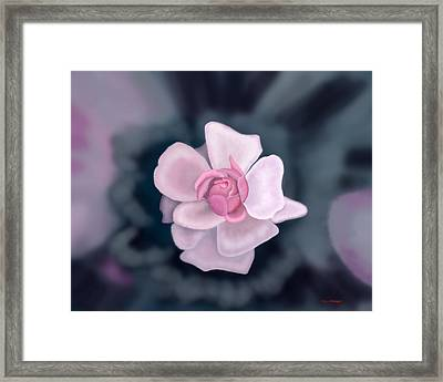 Rose Framed Print by Tim Stringer