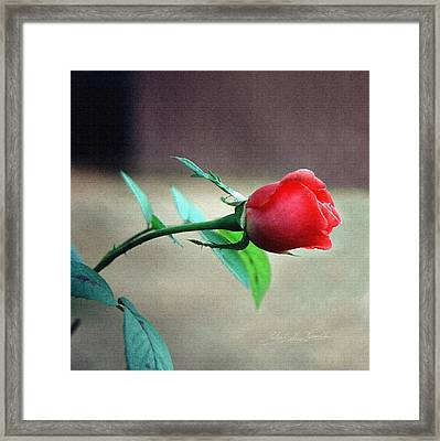 Framed Print featuring the pyrography Rosebud by Robert Kernodle