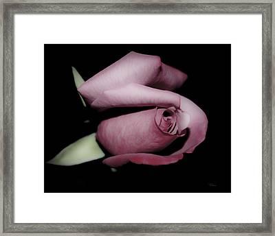 Rosebud Framed Print by Teresa Dixon