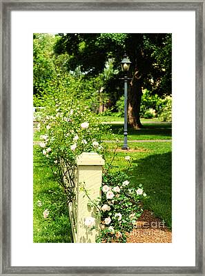 Roses Framed Print by HD Connelly