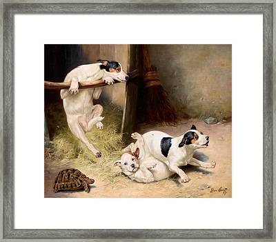Rough And Tumble Framed Print by Lilian Cheviot